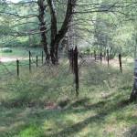 Cima di Lago 2 - Resti di filo spinato