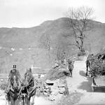 Trasporto di piantine di abete per la semina sulle montagne di Medeglia (CH-AFS#E27#1000/721#14095#3585)