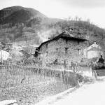 Trasporto di piantine di abete per la semina sulle montagne di Medeglia (CH-AFS/E27#1000/721#14095#3585)